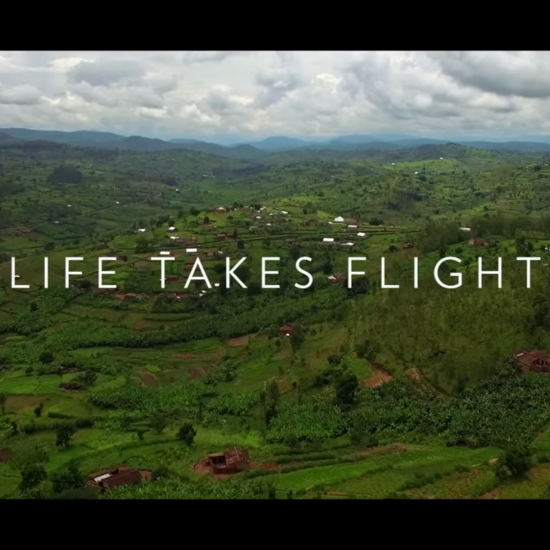 National Geographic: Chasing Genius – Life Takes Flight